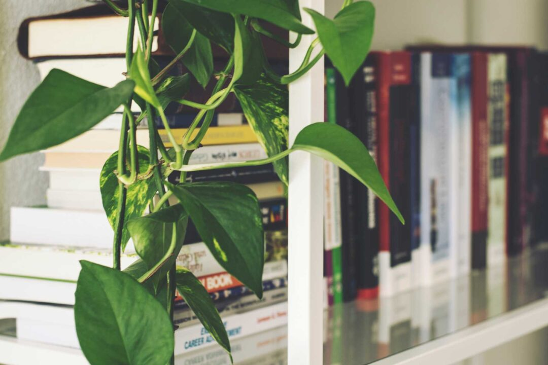 bookshelf with plant in foreground